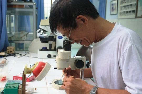 Thả muỗi mang vi khuẩn wolbachia ngừa sốt xuất huyết